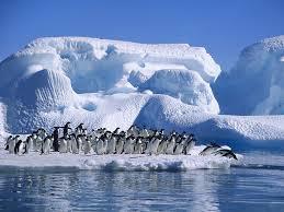 Antarctica 6